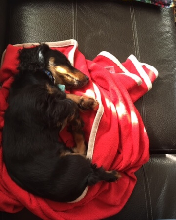 Freddy sleeping Bagged and Wrapping it Up - (un)Conventional Bookviews