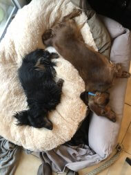 Lazy pups - (un)Conventional Bookworms - Weekend Wrap-up