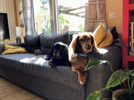 Puppy Love - (un)Conventional Bookworms - Weekend Wrap-up