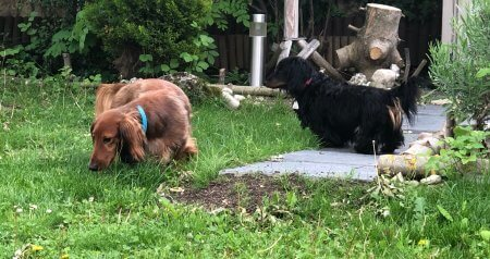 Puppies exploring the yard - (un)Conventional Bookworms - Weekend Wrap-up