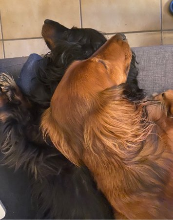 Cuddly puppies - (un)Conventional Bookworms - Weekend Wrap-up