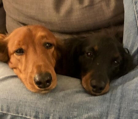 Cozy Puppies - (un)Conventional Bookworms - Weekend Wrap-up